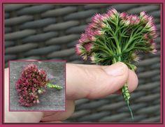 Twig Crafts, Flower Crafts, Diy Flowers, Flower Arrangement Designs, Floral Arrangements, Fall Wreaths, Christmas Wreaths, Ikebana, Christmas Tree Toppers