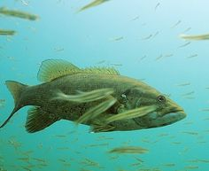 Best Baits: 15 Greatest Lures for Smallmouth Bass