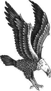 Galeria tatuazy - Tatuaze orły ptaki inne