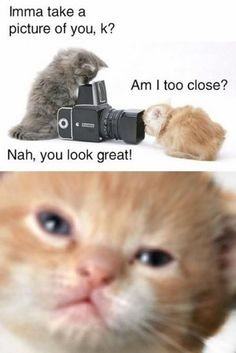 I Love Funny Animal - Sweet Funny Animal Photo of the Day: 30 funny animal captions - part 2 (30 pics)