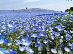 各都道府県のNo.1観光スポットの画像集 茨城県ひたち海浜公園