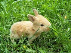 "So cute !! I had a bunny this color & Named the bunny as ""Butterscotch"".. hehe"