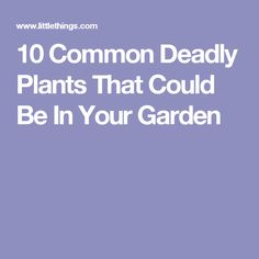 10 Common Deadly Plants That Could Be In Your Garden