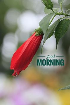 Good Morning Beautiful Pictures, Latest Good Morning Images, Morning Quotes Images, Good Morning Inspiration, Good Morning Images Hd, Morning Pictures, Good Morning Happy Saturday, Good Morning Roses, Good Morning Texts