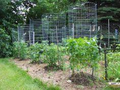 Green Zebra Market Garden: Make Your Own Sturdy Tomato Cages