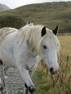 Visiting the horses of Summer Bay, Dutch Harbor, Alaska
