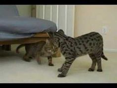 Jeana Bambu Jesse Nylah Youtube Pinterest Cat