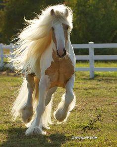 Horse / Gypsy Vanner  - Dragon Fire