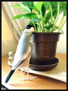 すっごい見てる #文鳥 pic.twitter.com/ILkr5dvSdy Love Birds, Beautiful Birds, Funny Animals, Wings, Happy, Cute, Kawaii, Funny Animal, Ser Feliz