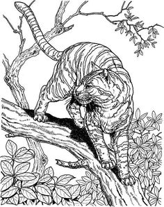 Jungle Coloring Pages Adult