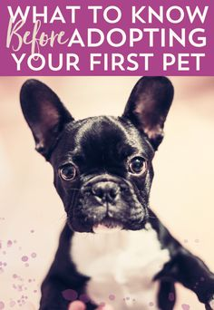 WHAT TO KNOW BEFORE ADOPTING YOUR FIRST PET/ Adopting your first pet is another stage of adulting that can be exciting but freaky at the same time. So, how do you determine if you're really ready to take on the responsibility of a pet?…