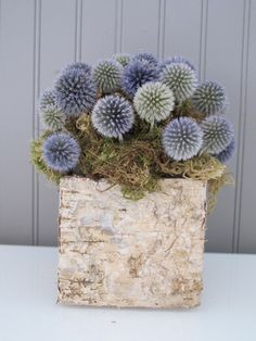 Thistle Arrangement in Birch Box on Etsy, $60.00