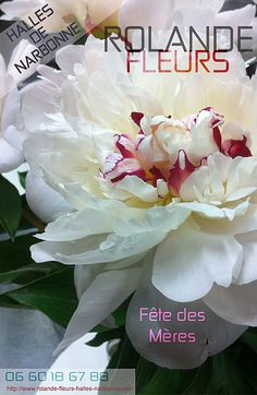 Fleuriste Narbonne http://www.rolande-fleurs-halles-narbonne.com/