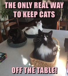 20 Animal Memes That Are Funny - World's largest collection of cat memes and other animals I Love Cats, Crazy Cats, Cool Cats, Cute Funny Animals, Funny Animal Pictures, Meme Pictures, Funny Cat Photos, Silly Cats, Cats And Kittens