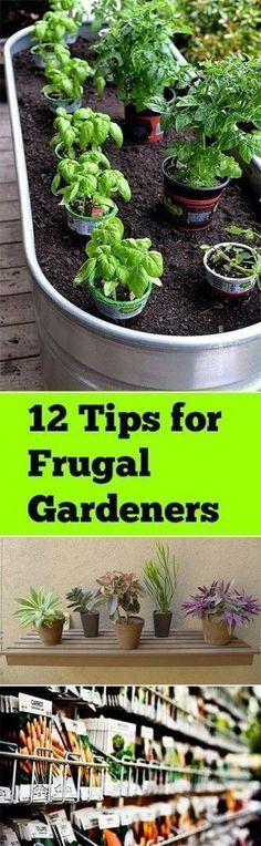Frugal gardening, frugal #gardening tips, gardening hacks, garden, DIY gardening, cheap gardening, easy gardening. #diygardening