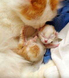 Mommy lovely (^-^)