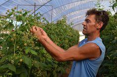 Gaspar Fernandez, socio agricultor de Cobella, Onubafruit