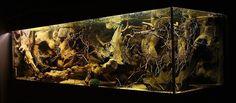 Amazon Biotope Aquarium | Diyenler: Supreme , tugix , körfez41 , grayprince ,