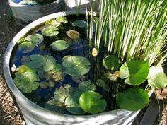 How to DIY Mini Garden Pond in a Container 6