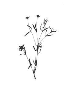 Botanical No. 2 / Mia Carameros