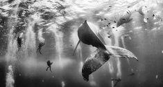 Susurradores de ballenas