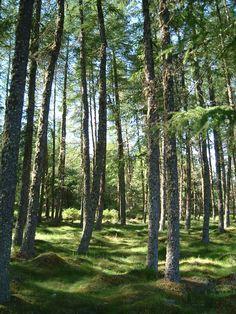 Loch Ochrie forest (Scotland)