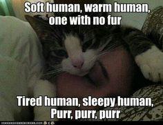 Apologies to soft kitty ;)