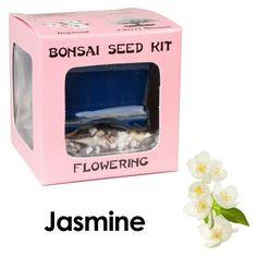 Eve's Jasmine Bonsai Seed Kit, Flowering, Complete Kit to Grow Jasmine Bonsai from Seed | shopswell