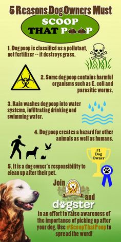 Every Dog Poops | Be a Scooper Hero and #ScoopThatPoop | Pawsitively Pets