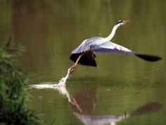 Taking flight Safari, African, Sky, Explore, Landscape, Animals, Heaven, Scenery, Animales