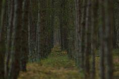 Las na Wyspie Sobieszewskiej