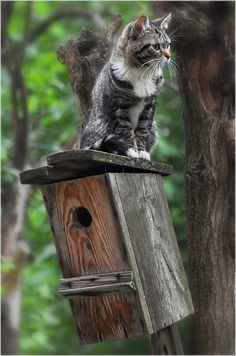 magical-meow:  Bird House by Para