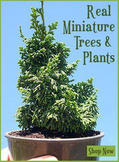 Shop Miniature Garden Plants
