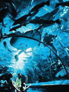 Underwater Architecture