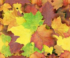 Herbstlaub Web Design, Autumn, Flowers, Painting, Art, Pictures, Autumn Leaves, Photomontage, Wallpapers