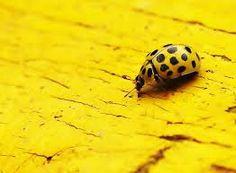 Bildergebnis für yellow