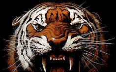 Tigers yikesssssssssss