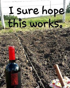 Weekend gardening project wine humor wineglasswriter meme is part of Wine jokes - Wine Jokes, Wine Meme, Wine Funnies, Funny Wine, Wine Signs, Coffee Wine, Drinking Quotes, In Vino Veritas, Flyer
