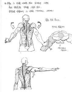대충대충 그림교실 - 등근육편 | 만화가 지망생 - 만지소 | 루리웹 모바일 Body Reference Drawing, Human Figure Drawing, Human Reference, Body Drawing, Anatomy Drawing, Anatomy Art, Drawing Base, Anatomy Reference, Art Reference