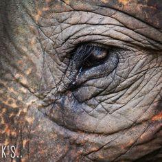 Beautiful eye of an Photographer- Kishan Goswami. Elephant Eye, Baby Elephant, Giraffe, Video Contest, Photo Contest, In Natura, Save The Elephants, Rhinos, Sketch Painting