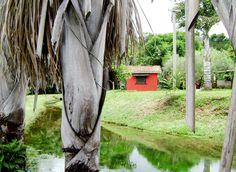 Pousada Jardim da Amazônia - MT  Desde 1997 Por Raquel Zanchet