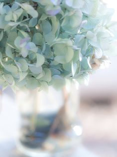 Soft white blue green flower petals, still life photo, teal, girly, shabby chic, unique gift for garden lover~ young ladies bedroom decor