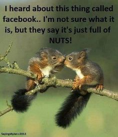 Squirrel love nuts so much. In case you live close to a nut tree, there is a chance that you can spot a squirrel running around carrying a nut. Cute Squirrel, Baby Squirrel, Squirrels, Squirrel Humor, Cute Baby Animals, Animals And Pets, Funny Animals, Animals Kissing, Wild Animals