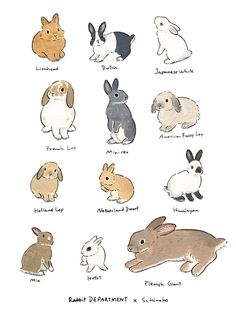 Acrylic Paint by Schinako Moriyama. Schinako Moriyama is an illustrator as bunny art from Fukushima, Japan Continue reading and for more Acrylic art→View Website Rabbit Drawing, Rabbit Art, Pet Rabbit, Dwarf Rabbit, Cute Animal Drawings, Animal Sketches, Cute Drawings, Animals And Pets, Baby Animals