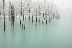 frozen pond in japan by kent shiraishi.