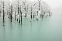 frozen pond in japan by kent shiraishi.