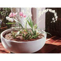 Orinoco Bowl Planter