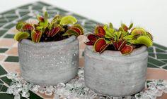 7 έξυπνοι τρόποι για να ξεφορτωθείτε της μύγες-featured_image