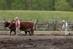 Farmers plowing with oxen.