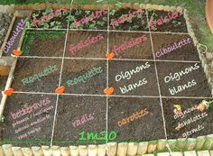 About Tree Seeds and Bonsai Seeds Germination Instructions Plan Potager, Potager Bio, Potager Garden, Herb Garden, Garden Tools, Bonsai Seeds, Tree Seeds, Aquaponics System, Water Plants